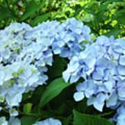 Blue Floral Hydrangea Flower Summer Garden Basle Troutman Art Print