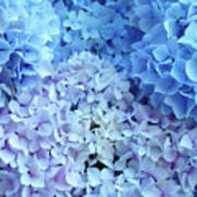 Blue Floral Hydrangreas Flowers Art Baslee Troutman Art Print