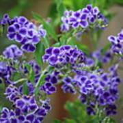 Blue Flowers Card Art Print