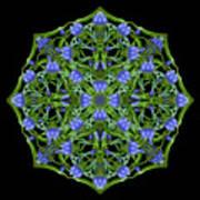 Blue Gentian Lattice Art Print