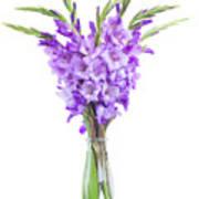 Blue  Gladiolus Art Print