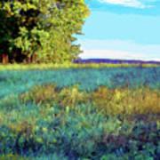 Blue Grass Sunny Day Art Print