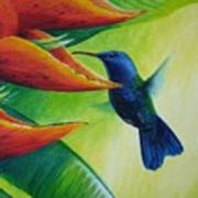 Blue-headed Hummingbird Art Print