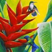Blue-headed Hummingbirds And Heliconia Art Print