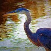 Blue Heron 2 Art Print