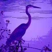 Blue Heron... Art Print