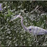 Blue Heron In Grass 4566 Art Print