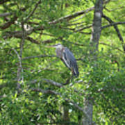 Blue Heron In Green Tree Art Print