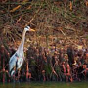 Blue Heron In The Cypress Knees Art Print