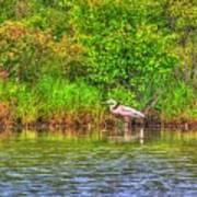 Blue Heron-in The Swamp-20 Art Print