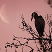The Heron And The Moon Art Print