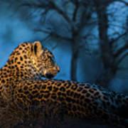 Blue Hour Leopard Art Print