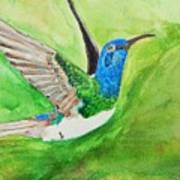 Blue Humming Bird Art Print
