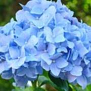 Blue Hydrangea Floral Art Print Hydrangeas Flowers Baslee Troutman Art Print
