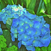 Blue Hydrangea In Bellingrath Gardens In Mobile, Alabama2 Art Print