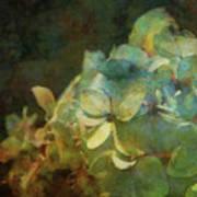 Blue Hydrangea Sunset Impression 1203 Idp_2 Art Print
