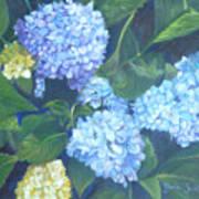 Blue Hydranges Art Print