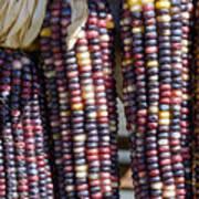 Blue Indian Corn Art Print