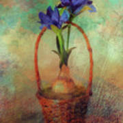 Blue Iris In A Basket Art Print