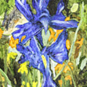 Blue Iris Painting Art Print