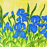 Blue Irises Art Print