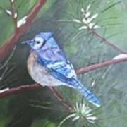 Blue Jay 2 Art Print