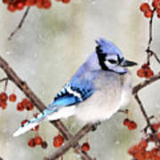 Blue Jay In Snowfall 3 Art Print