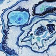 Blue Lace Agate I Art Print