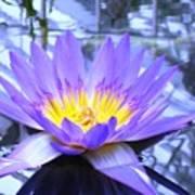 Blue Lotus Art Print