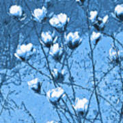 Blue Magnolia Art Print