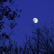 Blue Moon Among The Tree Tops Art Print