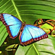 Blue Morpho Butterfly 2 - Paint Art Print