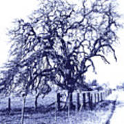 Blue Oak Art Print