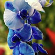 Blue Orchid Art Print