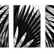 Blue Palma Triptych Art Print