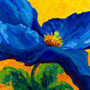 Blue Poppy Print by Marion Rose