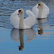 Blue Sky And Two Swans Art Print
