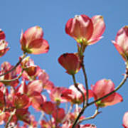 Blue Sky Art Prints Pink Dogwood Flowers 16 Dogwood Tree Art Prints Baslee Troutman Art Print