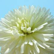 Blue Sky Art White Dahlia Flower Floral Prints Baslee Troutman Art Print