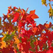 Blue Sky Autumn Art Prints Colorful Fall Tree Leaves Baslee Art Print