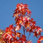 Blue Sky Fall Tree Leaves Landscape Art Prints Baslee Troutman Art Print
