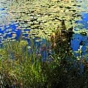 Blue Sky Pond Art Print