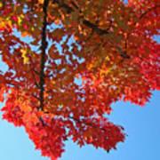 Blue Sky Red Autumn Leaves Sunlit Orange Baslee Troutman  Art Print
