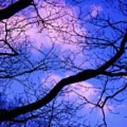 Blue Sky Through The Trees Art Print