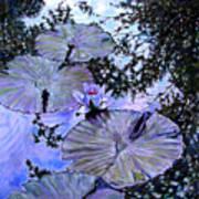 Blue Stillness Art Print