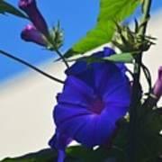 Blue Summer Flower Art Print