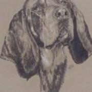 Blue Tick Coonhound Art Print