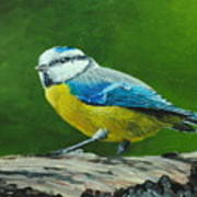 Blue Tit Bird Art Print