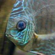Blue Tropical Fish Art Print