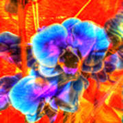 Blue Velvet Orchids Art Print